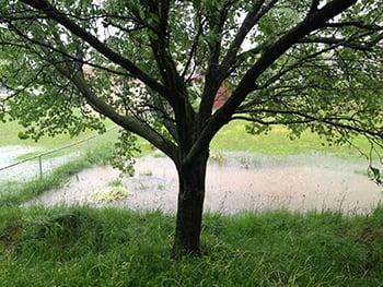Floodplain Area