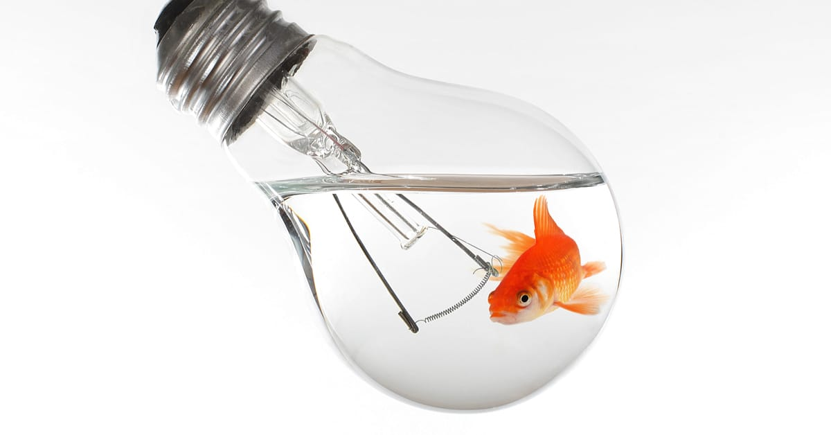 How Are Fish Like Light Bulbs?